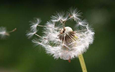 SHS_bildbyra_pollen_1200x800